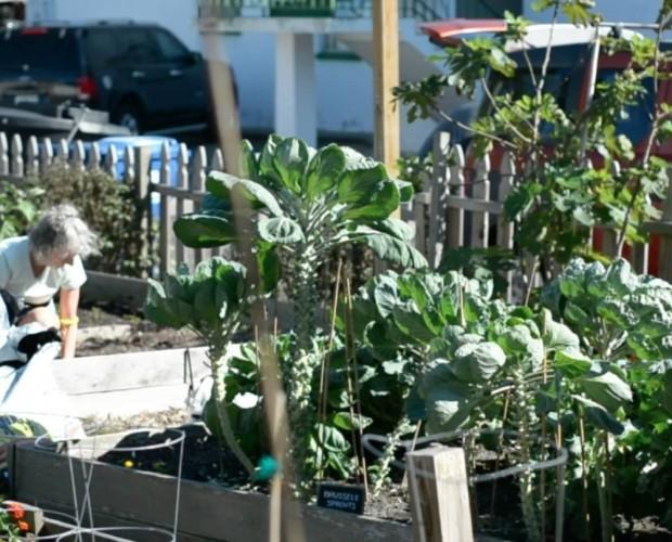 A community garden in Florida